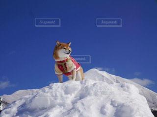 犬 - No.389402