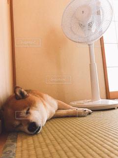 扇風機の写真・画像素材[495214]