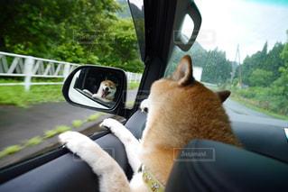 犬の写真・画像素材[701664]