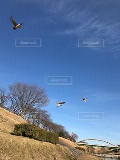 川辺を飛ぶ鳥の写真・画像素材[949360]