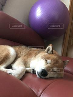 バランスボールの下で寝るの写真・画像素材[966760]