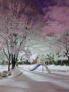 地面の雪の木の写真・画像素材[973072]
