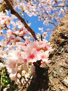 花の写真・画像素材[1094070]