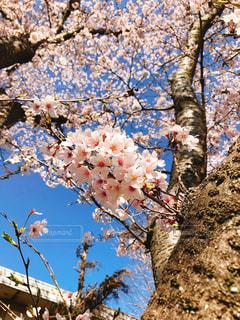 花の写真・画像素材[1094071]