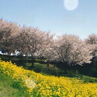 花の写真・画像素材[1094072]