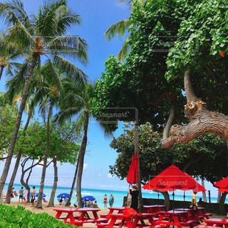 ヤシの木とパラソル向こう側は海の写真・画像素材[1279947]