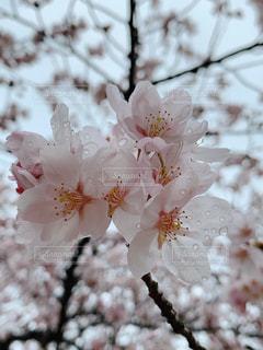 花のクローズアップの写真・画像素材[3066891]