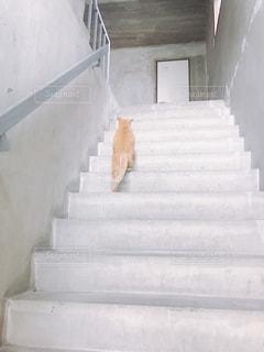 猫の写真・画像素材[363817]