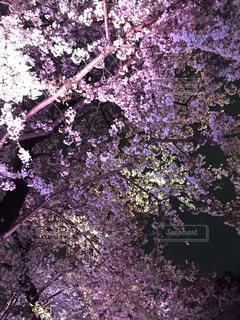 No.357956 桜