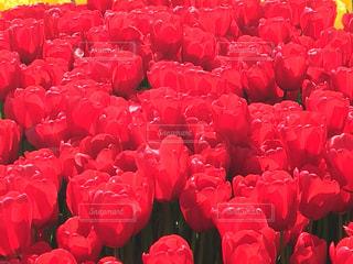 花の写真・画像素材[411546]