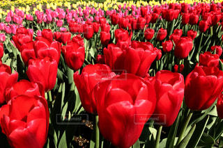 花の写真・画像素材[411549]