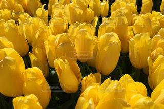 花の写真・画像素材[411550]