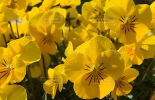 花の写真・画像素材[411593]