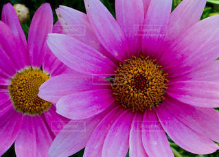 花の写真・画像素材[411596]