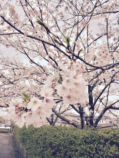 春の写真・画像素材[418601]