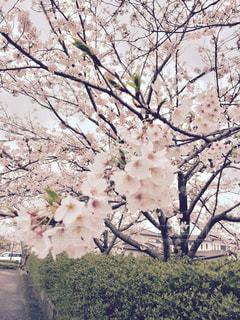 春 - No.418601