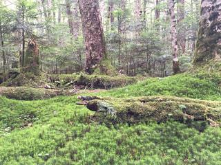 森林の写真・画像素材[358623]