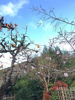 梅の写真・画像素材[358631]
