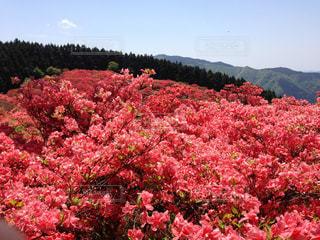 花の写真・画像素材[359979]