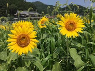 夏の写真・画像素材[368434]