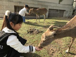 奈良公園の写真・画像素材[1778640]
