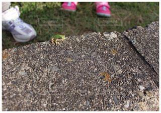 カエル見つけた!の写真・画像素材[1778999]