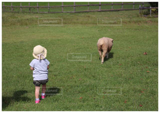 羊と娘の写真・画像素材[1779001]