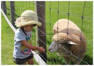 羊と娘の写真・画像素材[1779002]