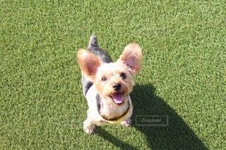 愛犬とお散歩の写真・画像素材[3683714]