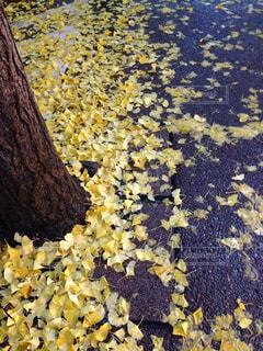 黄色の写真・画像素材[358083]