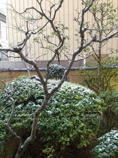 冬の写真・画像素材[358085]