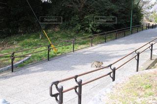 猫の写真・画像素材[359377]