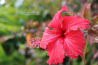 花の写真・画像素材[380828]