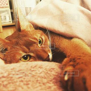 猫の写真・画像素材[358094]