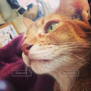 猫の写真・画像素材[358118]