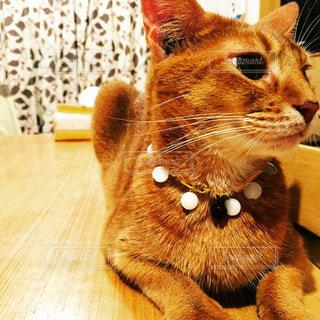 猫の写真・画像素材[358127]