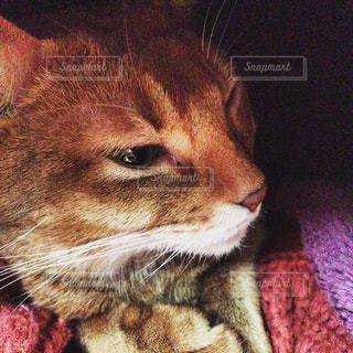 猫の写真・画像素材[358132]