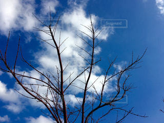 自然の写真・画像素材[366254]