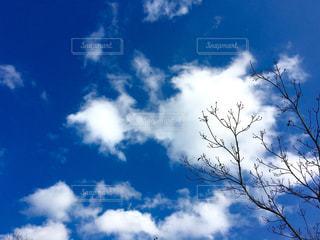 自然の写真・画像素材[366260]