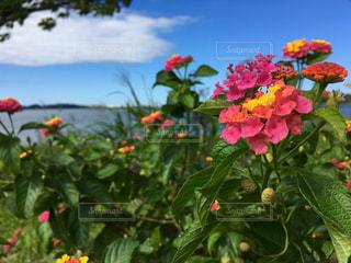 カラフルな花の植物 - No.793439