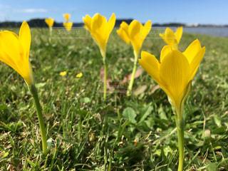 草の中の黄色い花の写真・画像素材[793440]