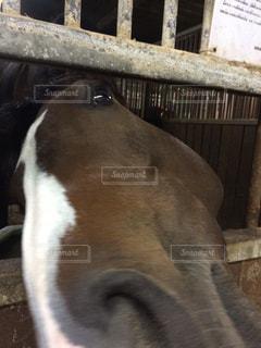 動物,かわいい,茶色,白い,馬,かお,可愛い,アップ,目,視線,うま,カワイイ,左,みつめる,茶色い,しろい