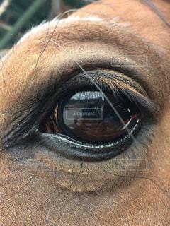 馬,映る,目,瞳,見つめる,ひとみ,ポニー,乗馬,視線,うま,写る,みつめる,馬面,洗い場,うつる,うまづら