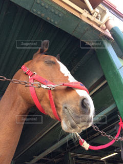 馬の写真・画像素材[358339]