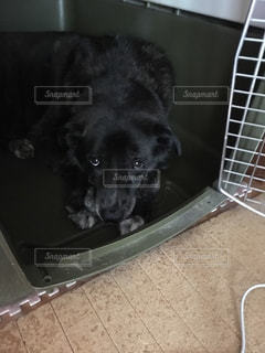 犬の写真・画像素材[358378]
