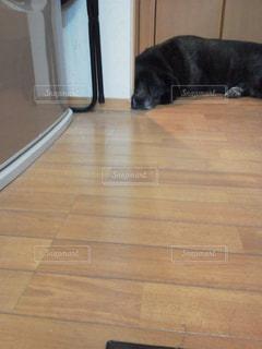 犬の写真・画像素材[358888]