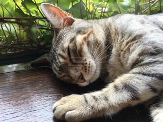 猫の写真・画像素材[358890]