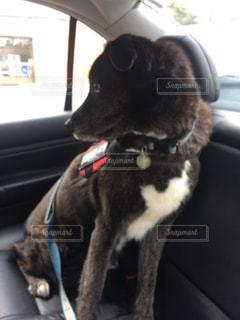 犬の写真・画像素材[443392]