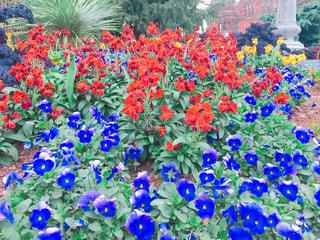 春の写真・画像素材[362814]