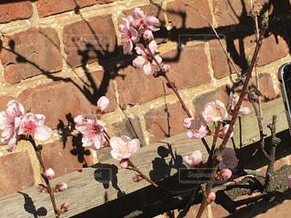 桜 - No.369965